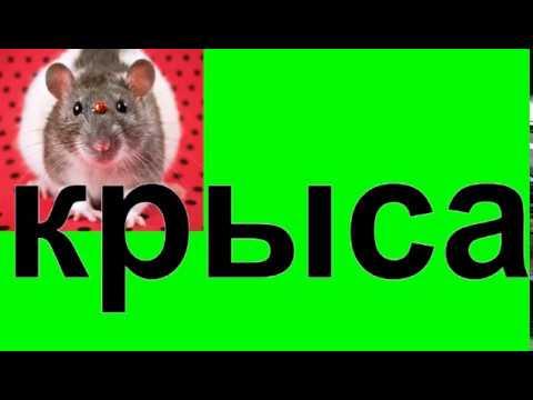 к чему снится крыса.Сонник от Ирины