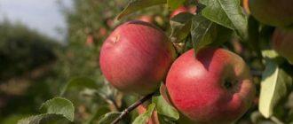 заговор на яблоко