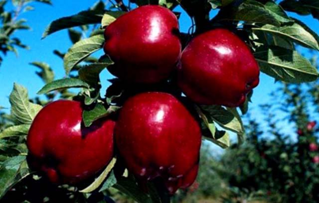 яблоки магия