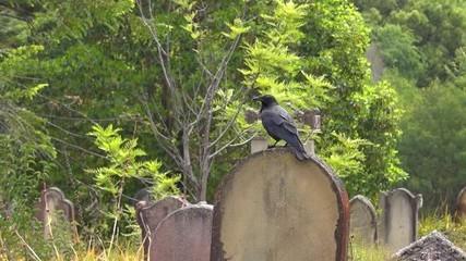 обряд на деньги на кладбище