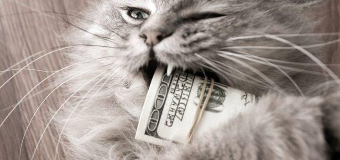 снятие порчи на деньги