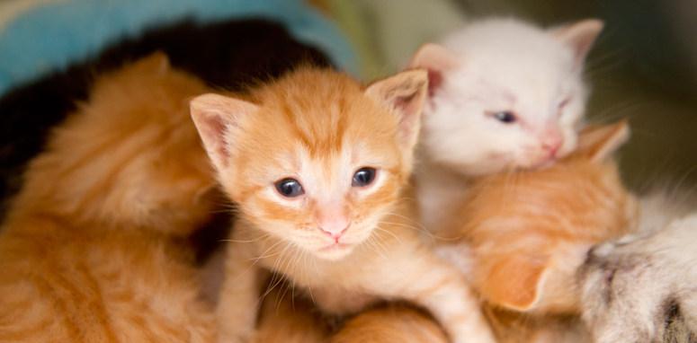 К чему снится много кошек с котятами