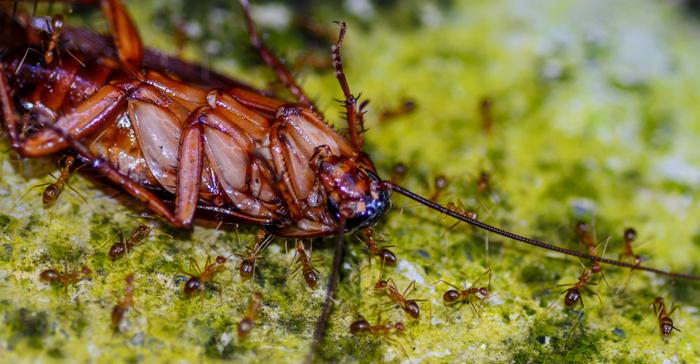 К чему снятся тараканы в квартире: живые, дохлые, большие и маленькие