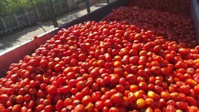 много помидоров во сне