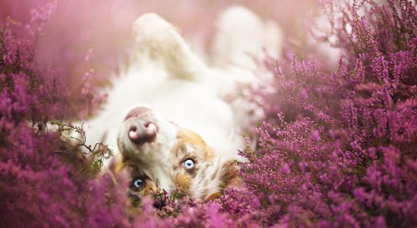 К чему снится щенок женщине незамужней
