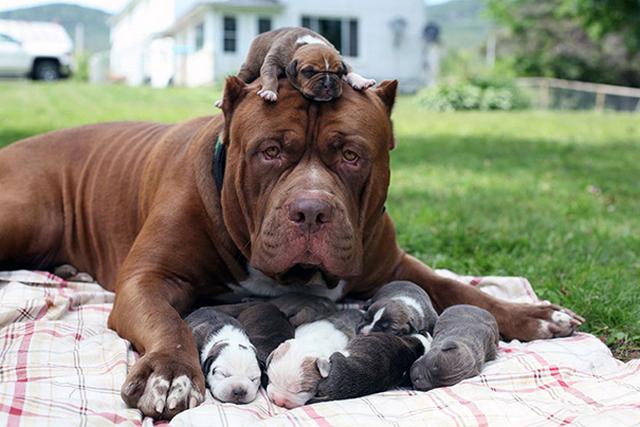 приснились щенки