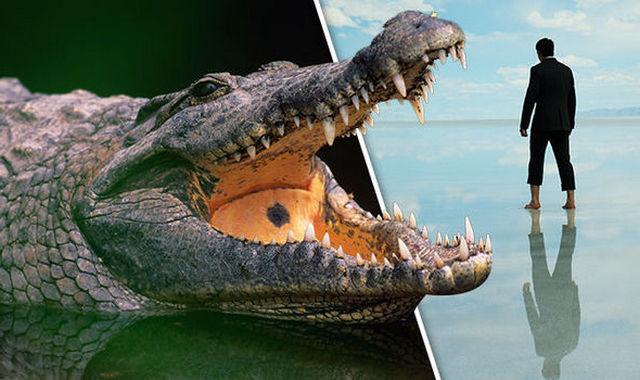 приснился аллигатор к чему