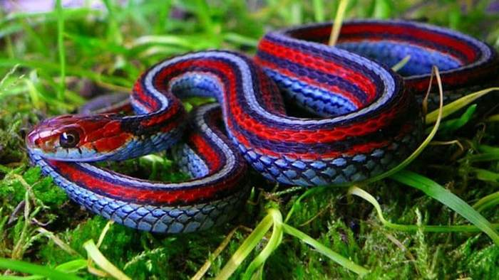 К чему снится небольшая змея