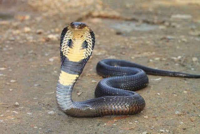змеи снятся