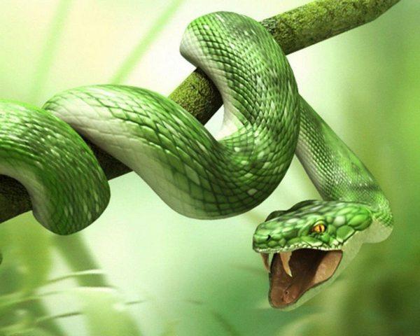 змей во сне