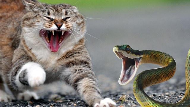 приснилась змея и пауки