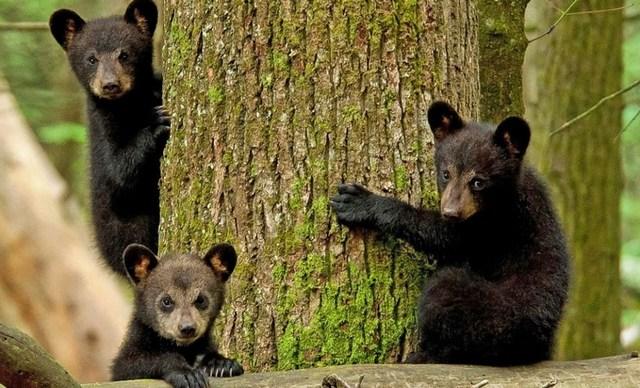 что означает сон о медведе