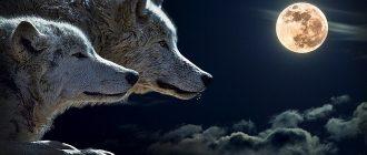 сон волки