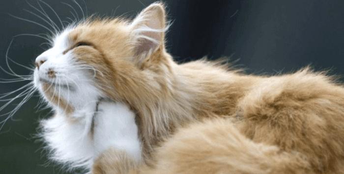 Сонник Блохи на кошке 😴 приснились, к чему снятся Блохи на кошке во сне видеть?