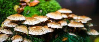сон собирать грибы