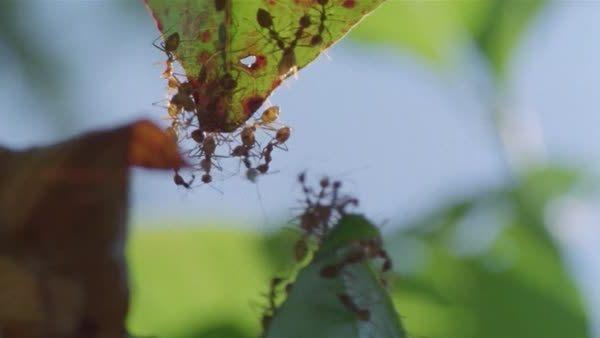 муравьи кусали во сне