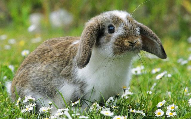 приснился кролик