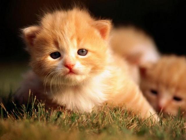 почему снятся котята