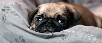 сон щенок