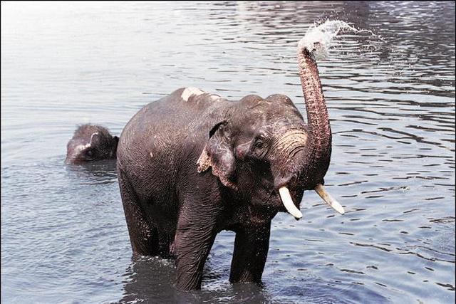 сонник белый слон