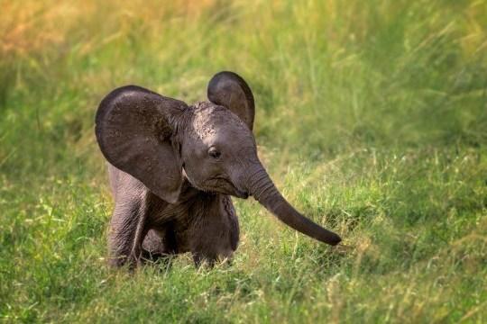 сон слоненок