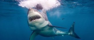 сон акула