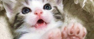 сон котенок