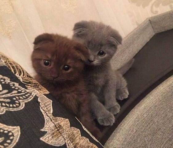 к чему приснились кошки и котята
