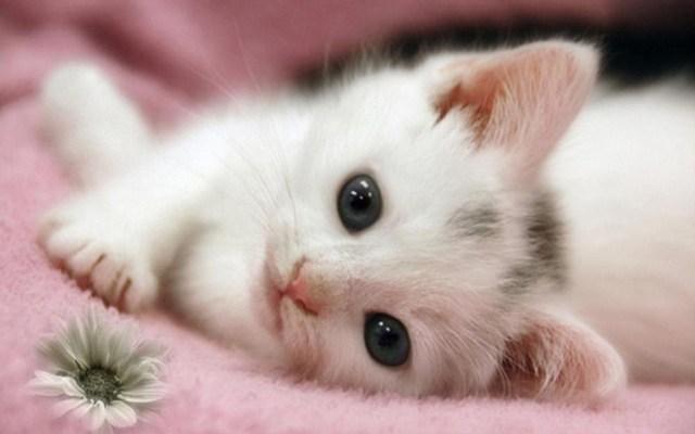 сонник для женщины котики