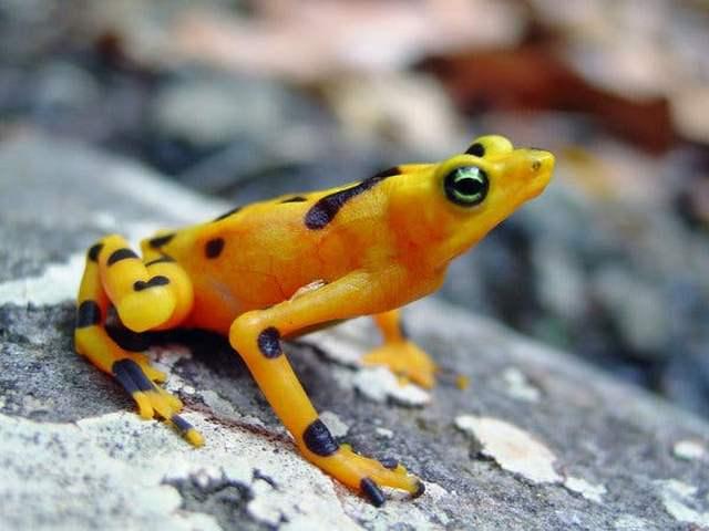 к чему видеть лягушку