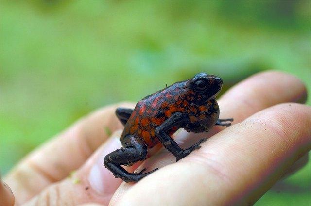 сон про жаб