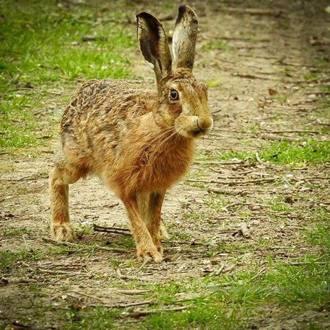сон кролик