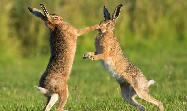 брать зайца на руки во сне