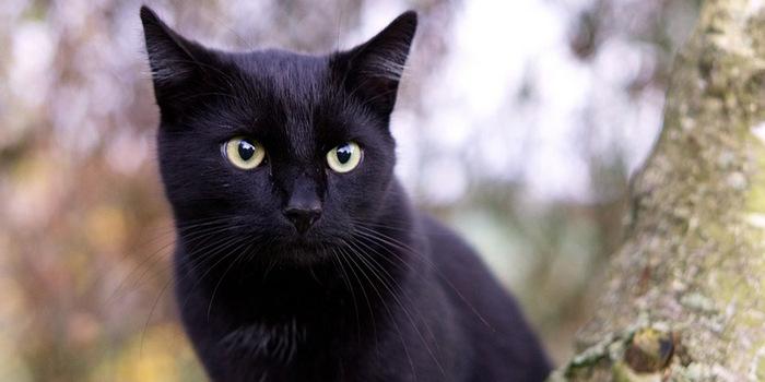 К чему снится черная кошка женщине во сне