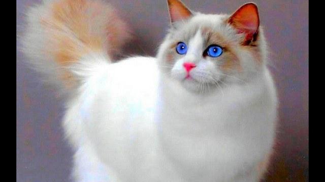 сон белая кошка