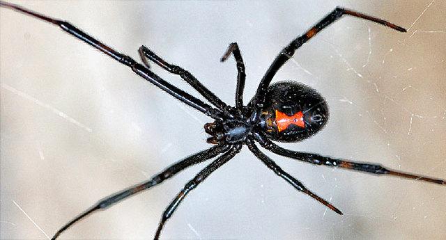 снятся огромные пауки