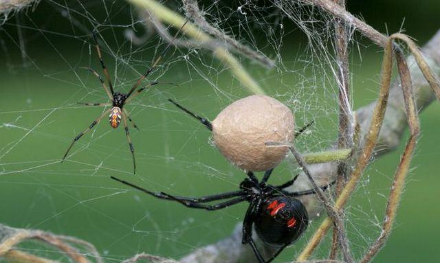 сон паук