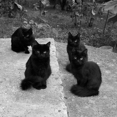 сон про котов
