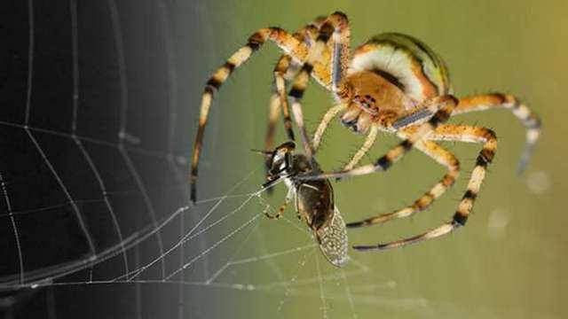приснились в доме пауки