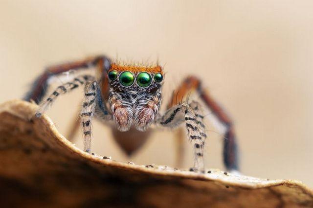 приснились пауки