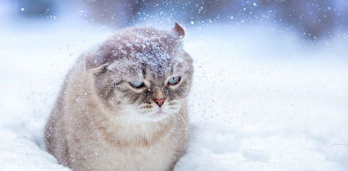 К чему снится белый снег за окном