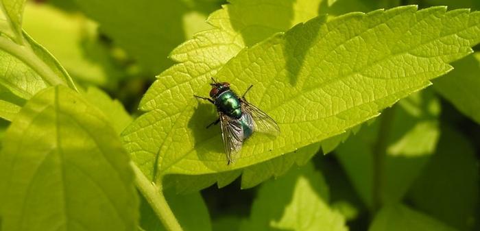 К чему снятся мухи в чужом доме