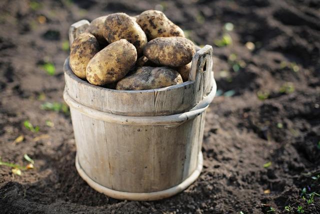 приснилась картошка крупная