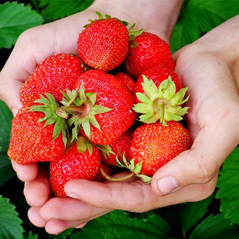 приснились ягоды