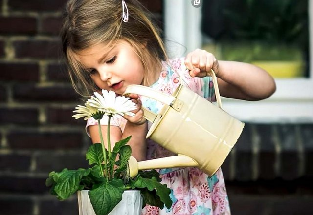 сон поливать цветы на подоконнике