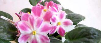 сон цветок
