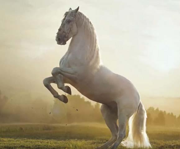 приснился конь