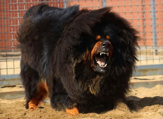 снится злой пес