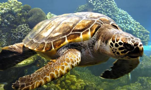 К чему снится черепаха женщине: подробное толкование по сонникам