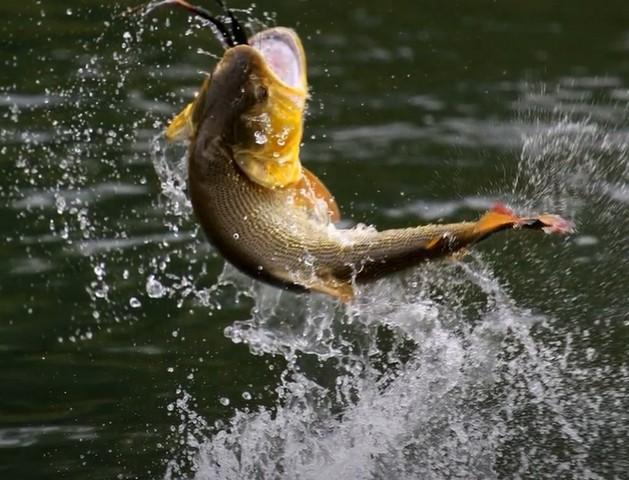 К чему снится ловить рыбу на удочку женщине